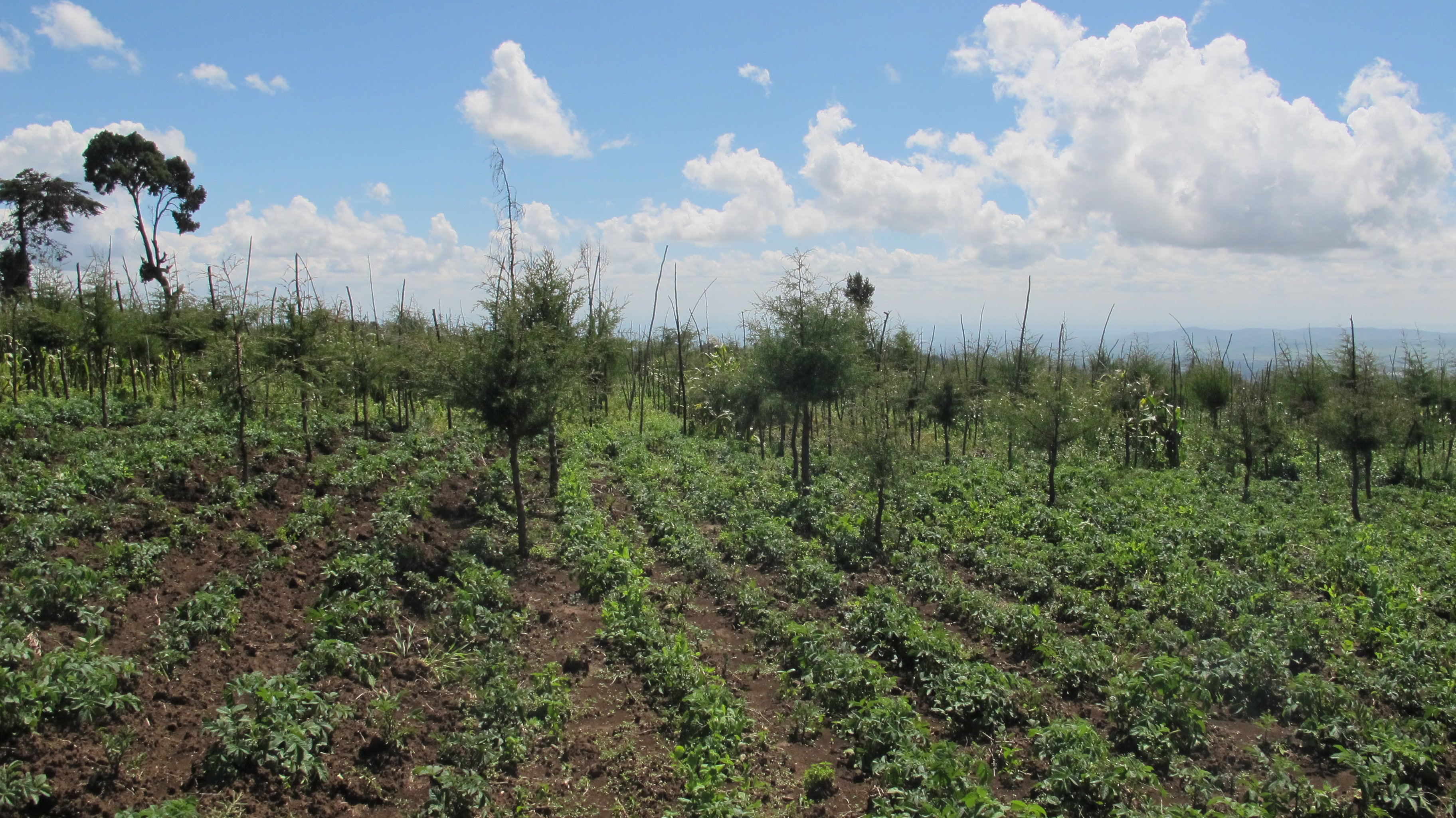 agroforestry example by Lauriane Cayet