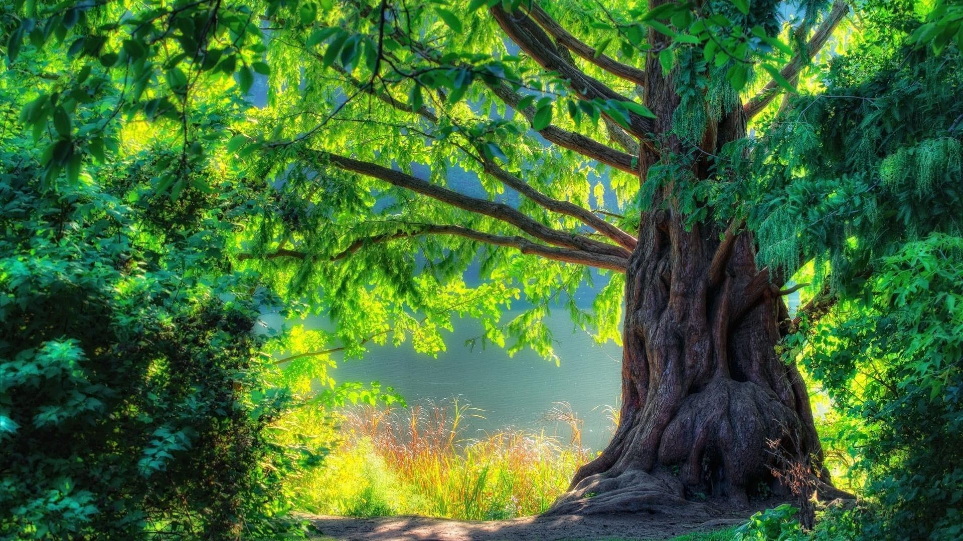 Beautiful-Nature-Images-HD-Wallpaper