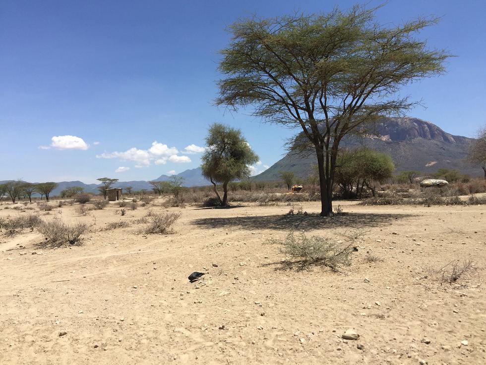 Bernadette Desert