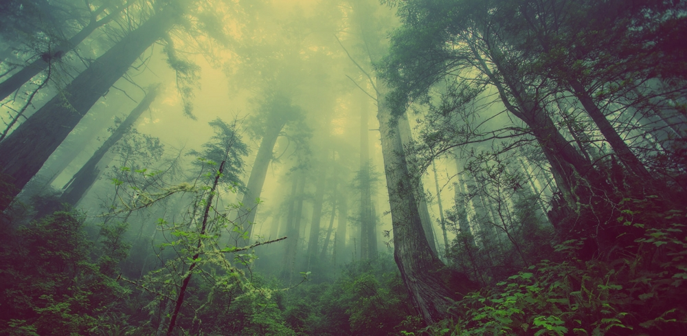 Blog Trees and Forests 1000