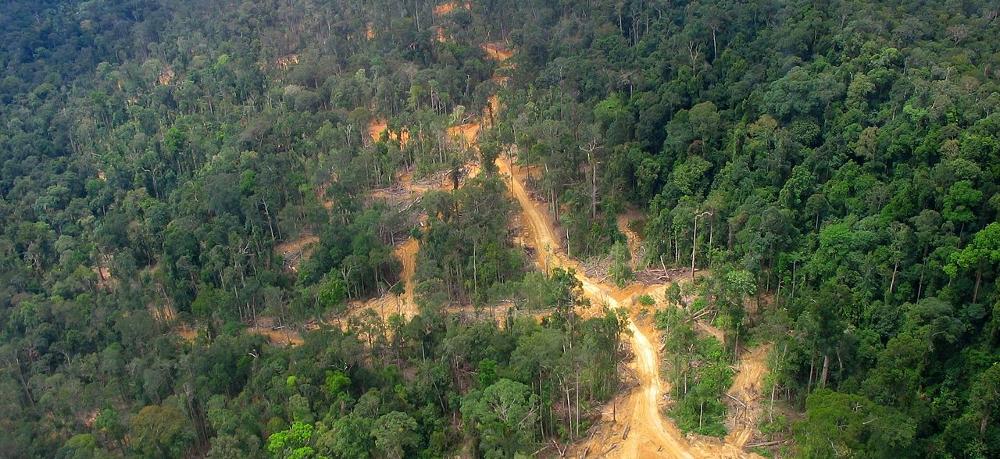 borneo-deforestation-1000x458