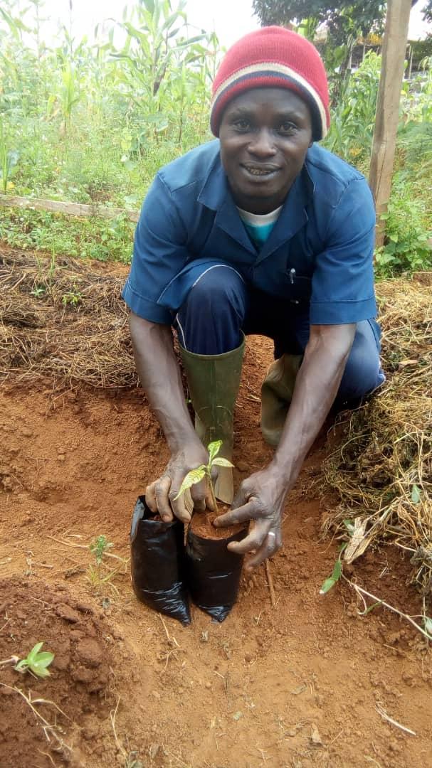 EruDef Tree Planting Technician potting Cola seedling in Mmuockmbie
