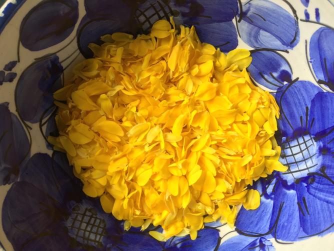 Foraged gorse flower petals