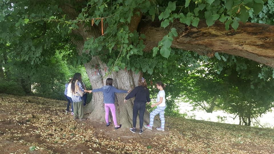 Grove Tree Circle