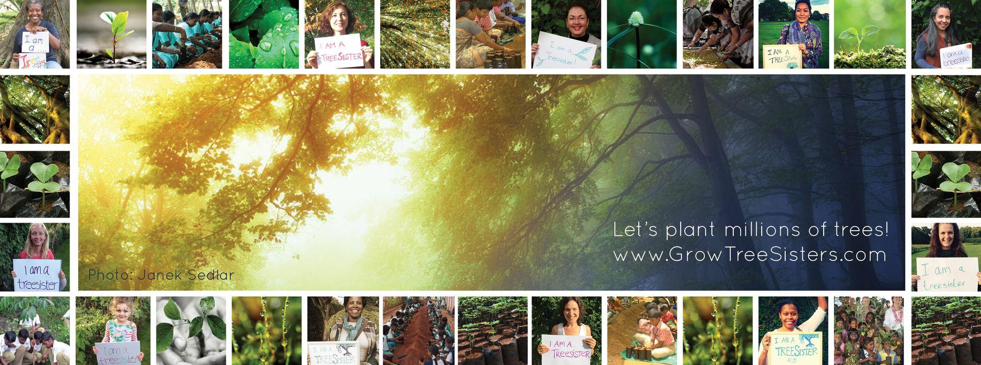 Grow TreeSisters - Facebook Header2