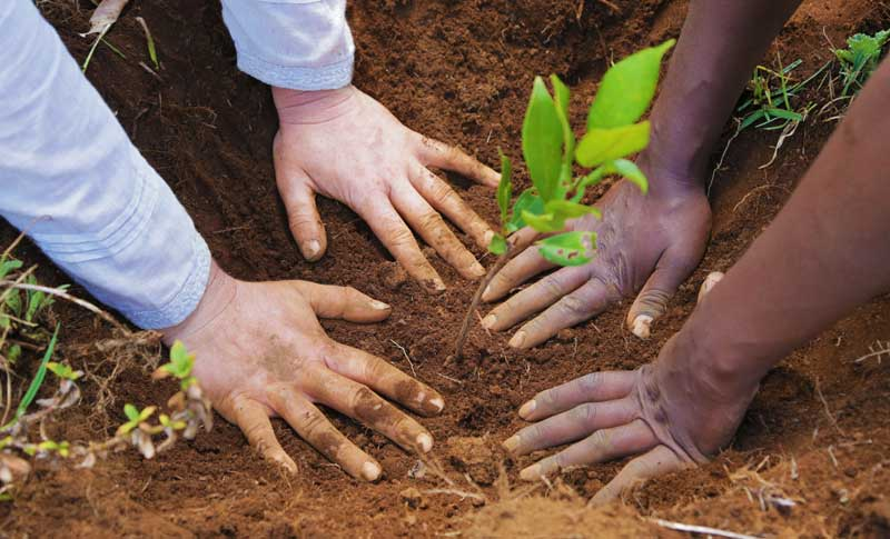 Hands-in-the-dirt