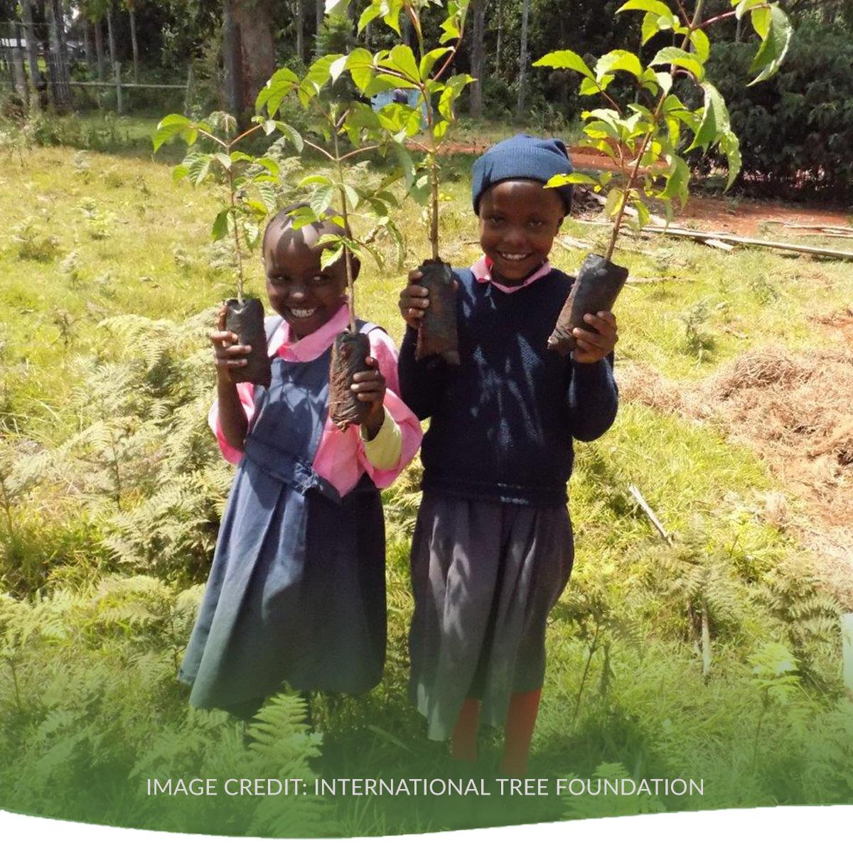 June2019 TreeStory 2