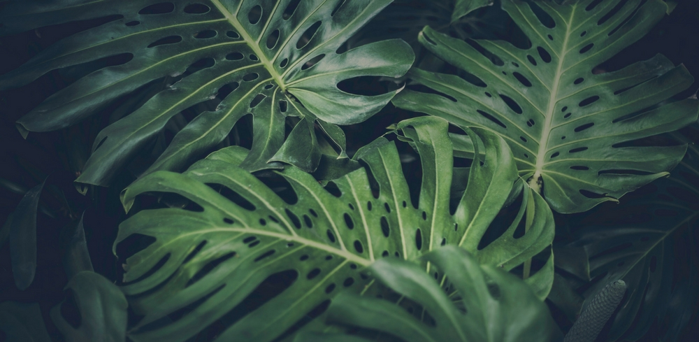 leaves 1000