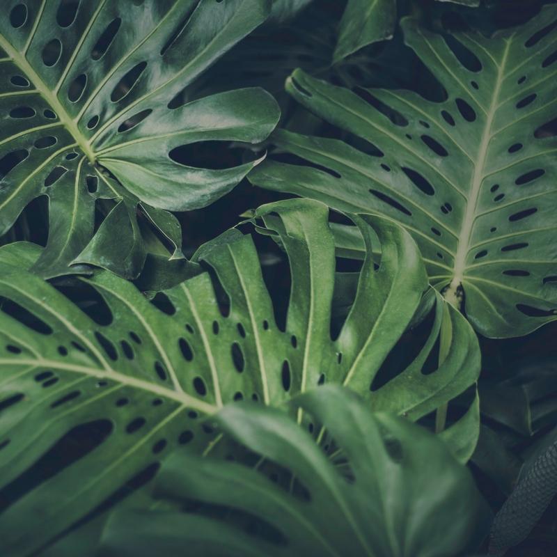 Leaves Sq