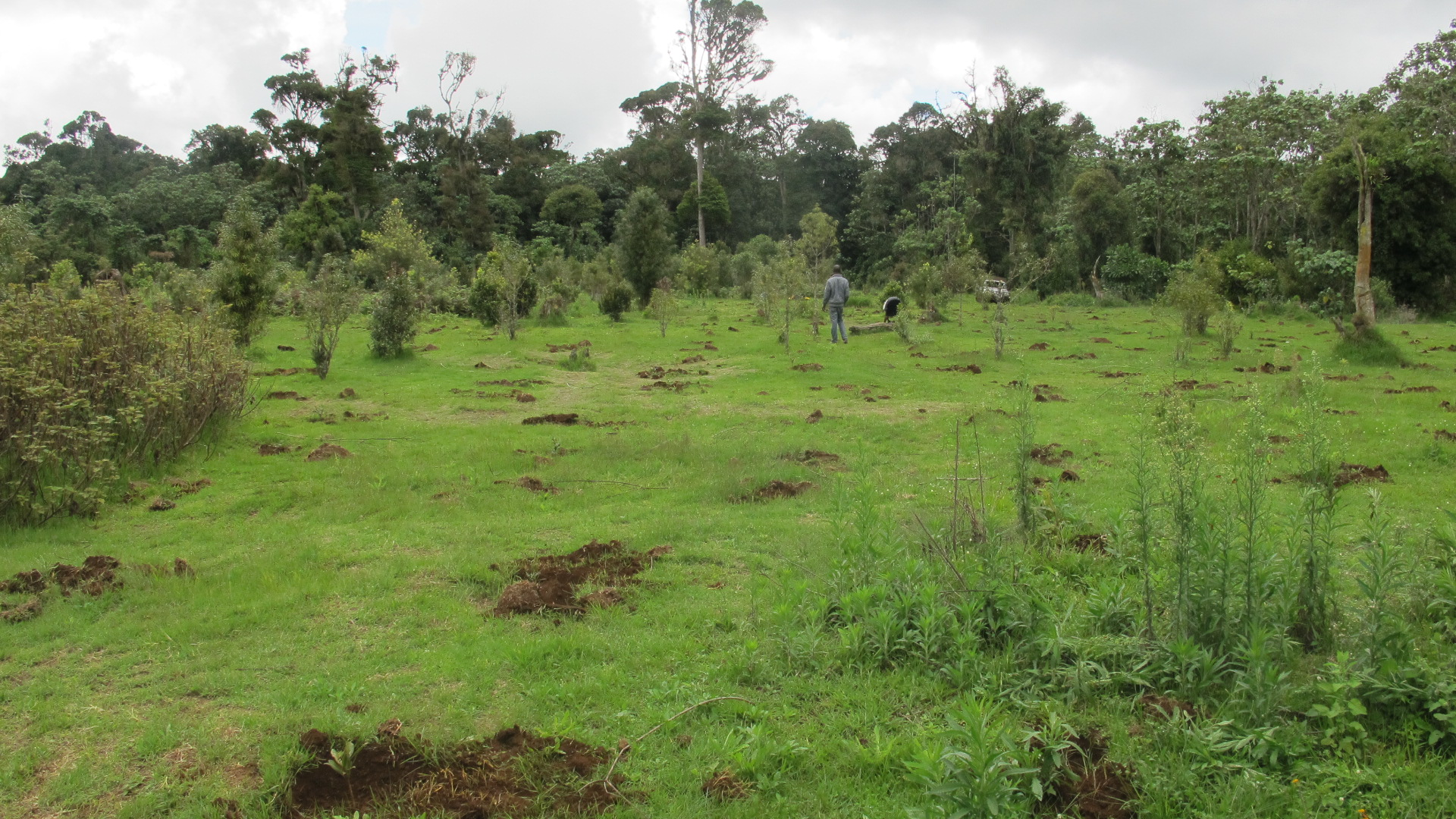 Mt. Kenya Planting area