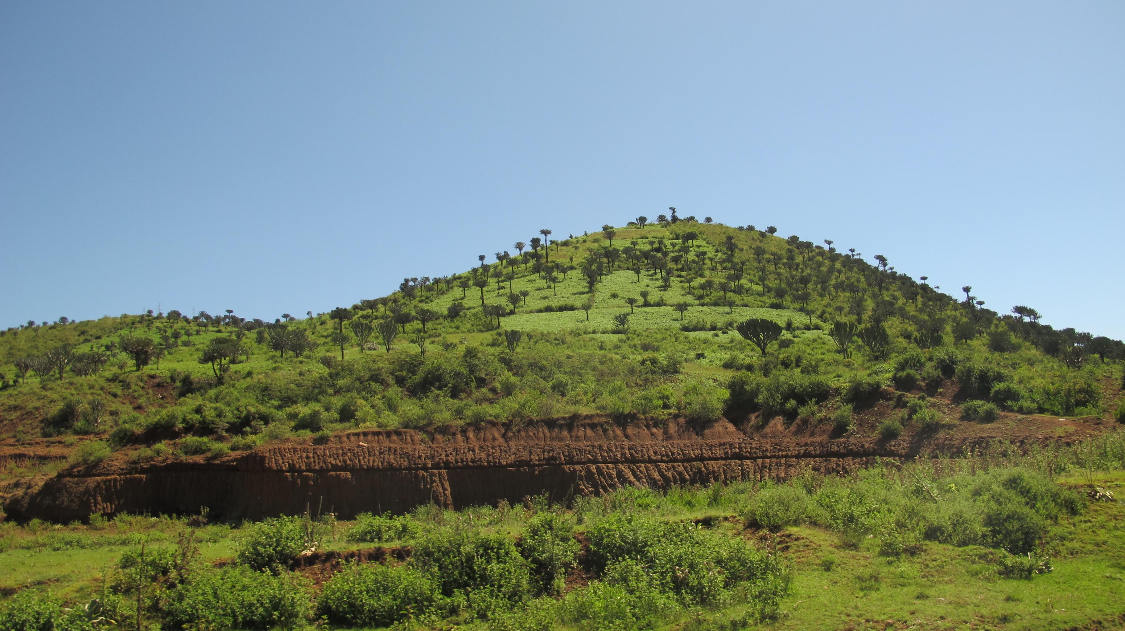 Mt. Kenya replanting area