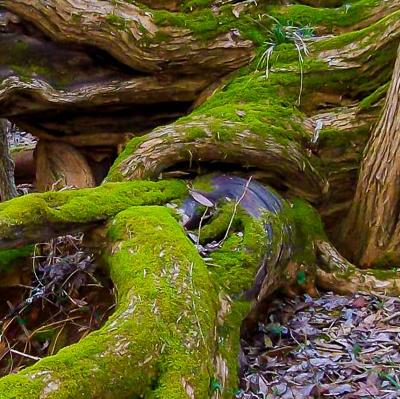Narled-Tree-Trunk-3-400x399