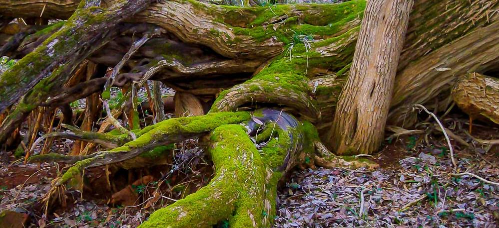 Narled-Tree-Trunk-3-999x458