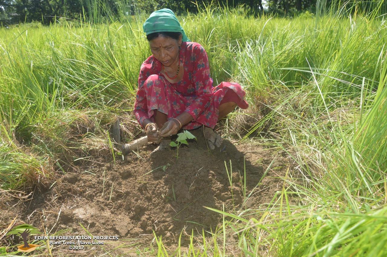 Nepal Eden planting in field