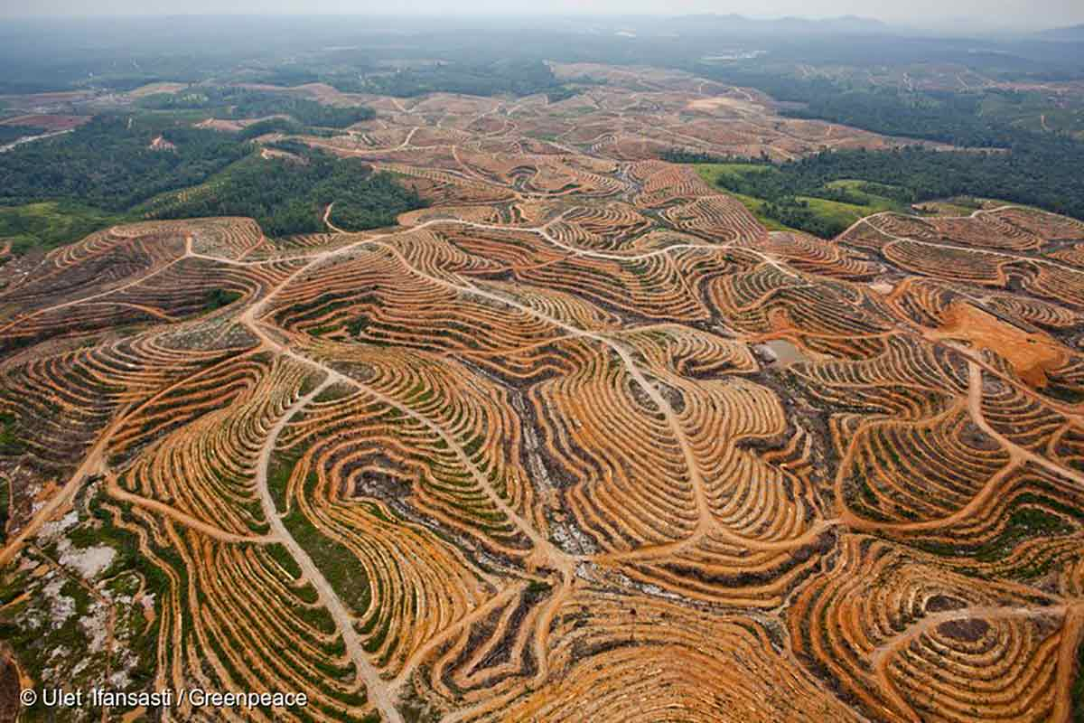 Palm-Oil-Deforestation-Indonesia
