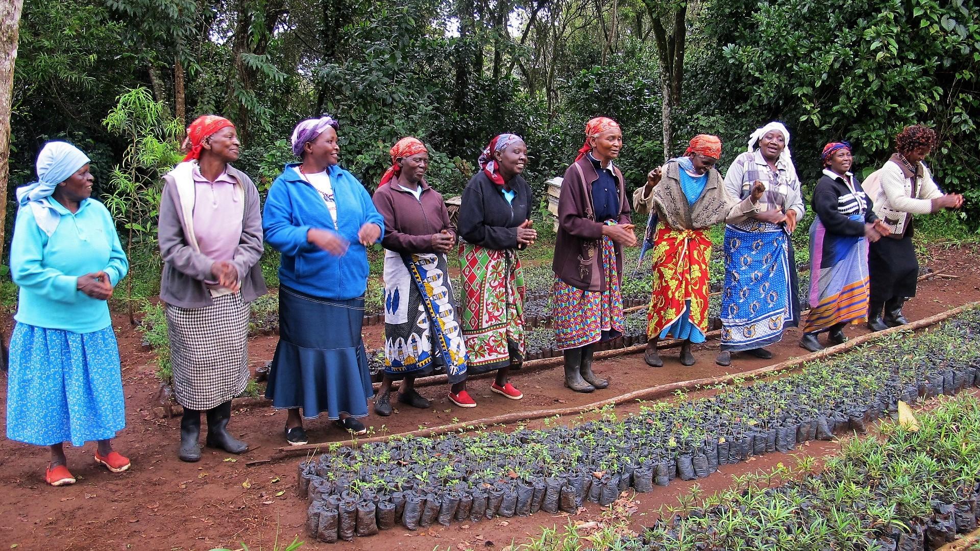 Planter at Mt. Kenya