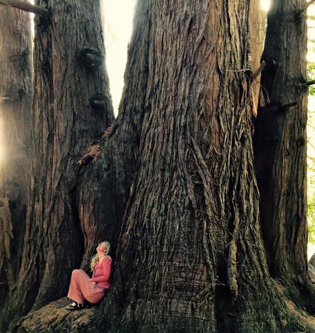 redwoodClare