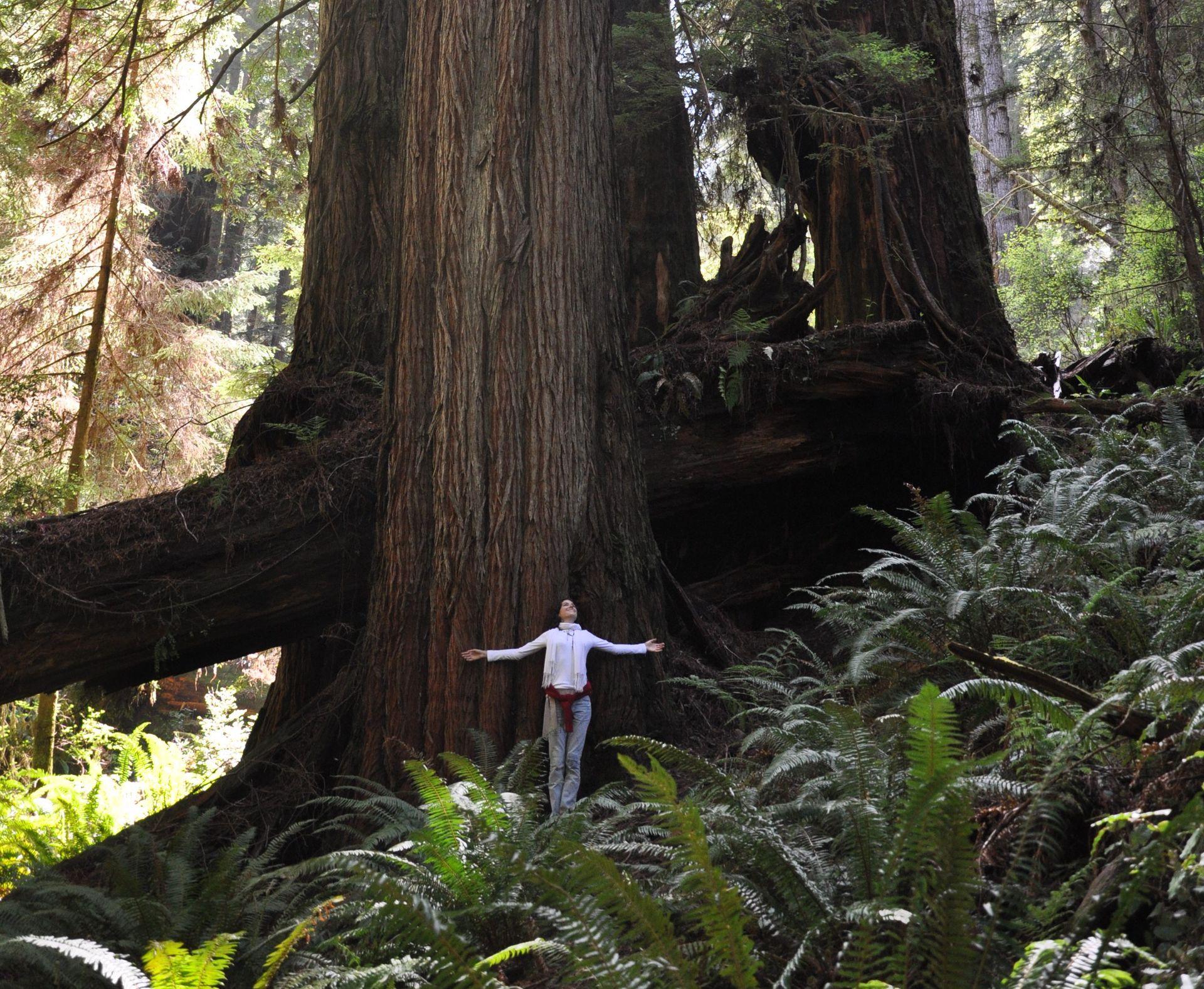 RedwoodSophie