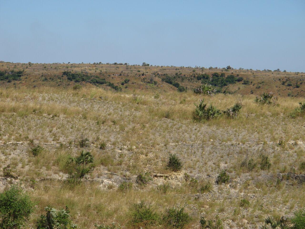 Reforestation site Madgascar Dry Deciduous