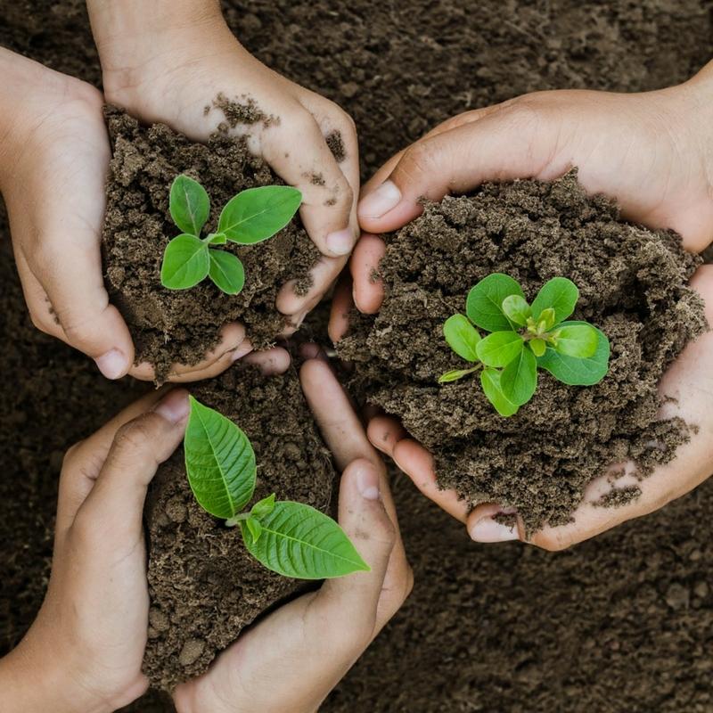 SeedlingshandsSq