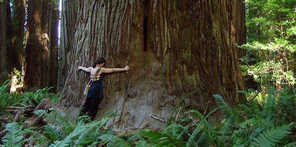 TreeSisters ~ The Deepening