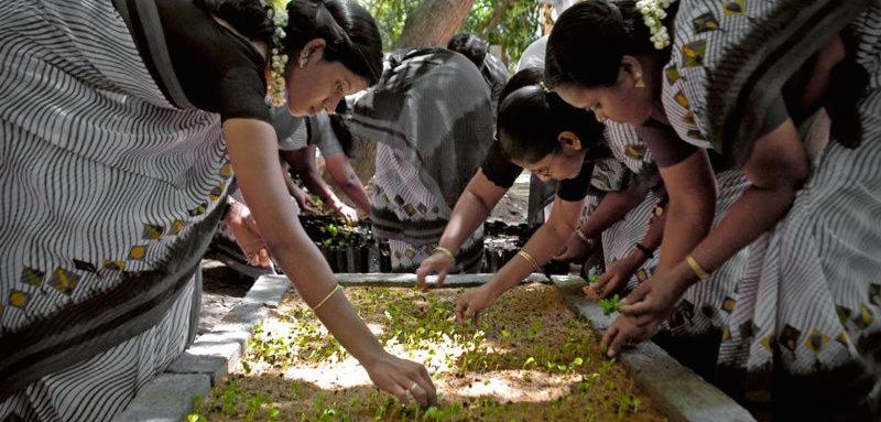 tree planting crop