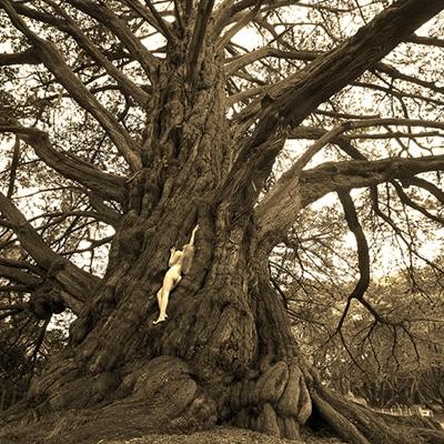 TreeGirl1-400x400
