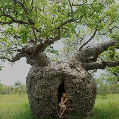 TreeGirl12-400x400