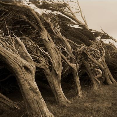 TreeGirl8-400x400