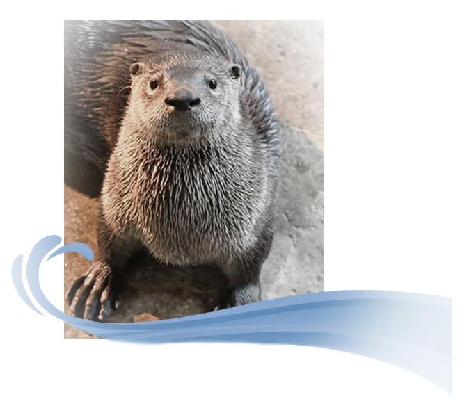 river-otter-moe