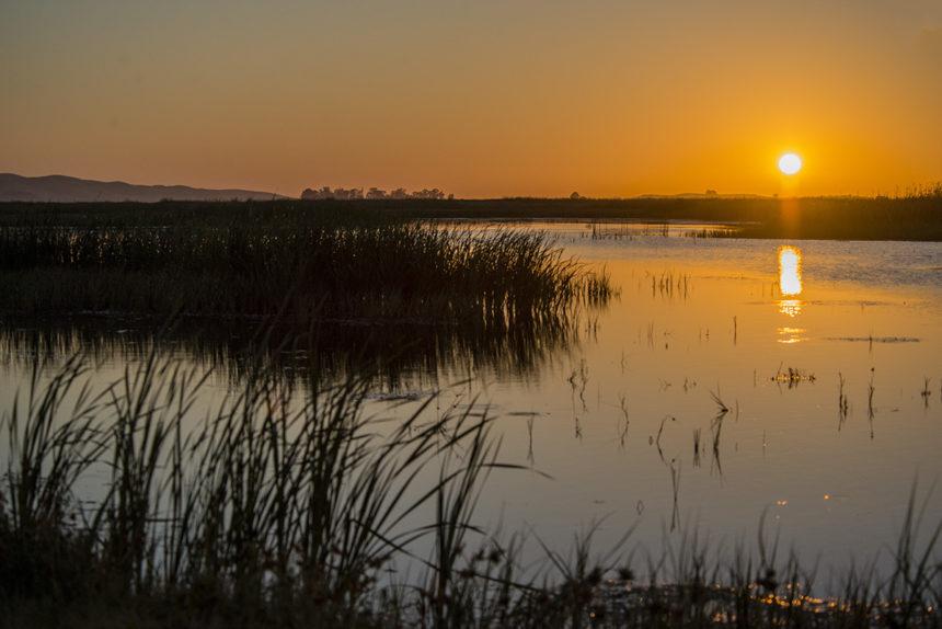 Wetland habitat at sunrise.