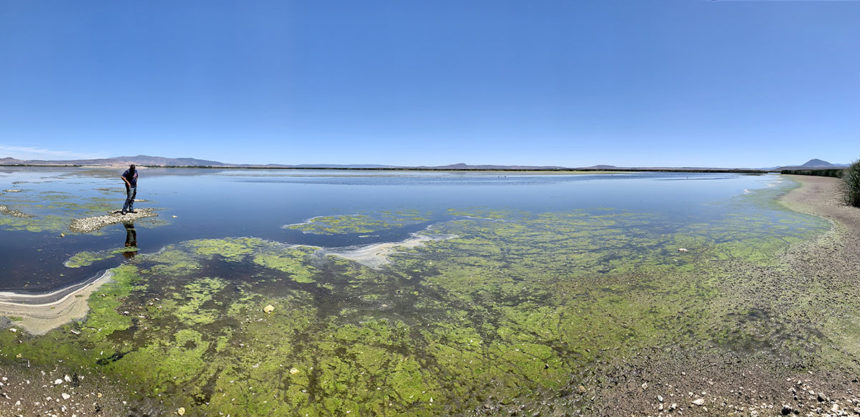 Low water in Unit 2 of the Lower Klamath NWR
