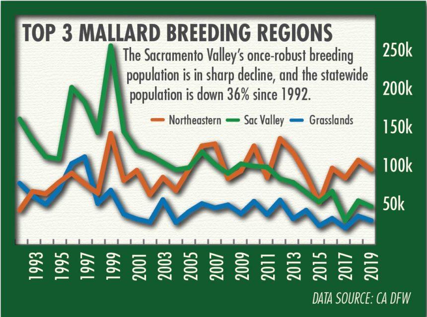 Graph shows trends for California's mallard breeding population by region