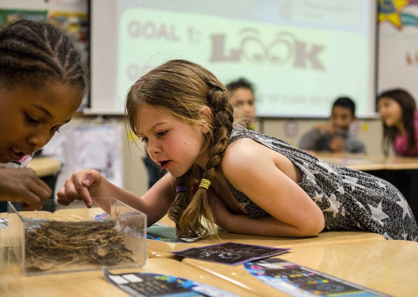 School children examine a bird nest in CWA's outdoor education program.