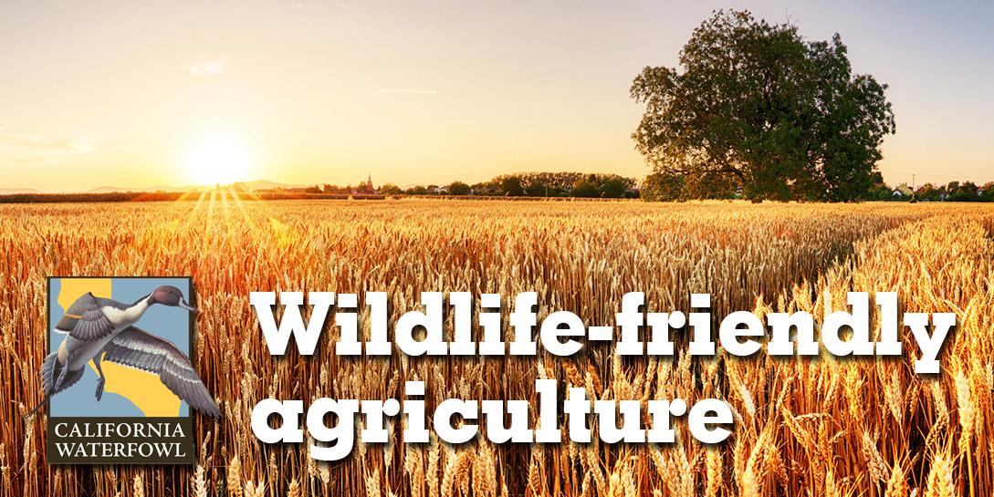 wheat field with CWA logo