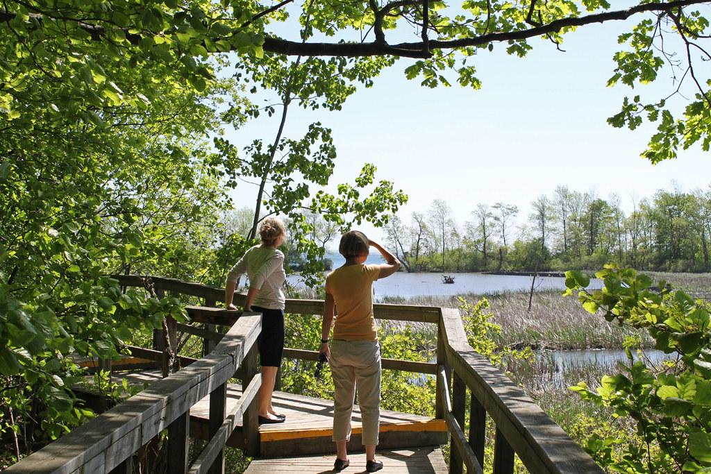 Restoring Rattray Marsh Conservation Area
