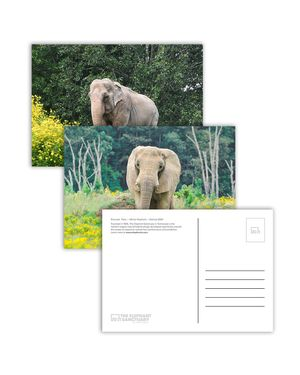 Boxed Postcard Set