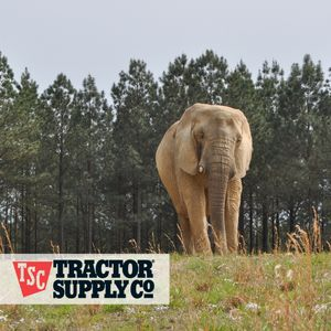 Tractor Supply Co. Gift Cards