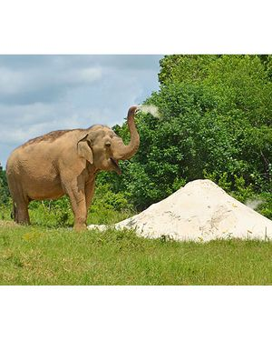 Sand Piles for Elephants! -- A Dump Truck Load is $600.00 -- Ongoing Need!