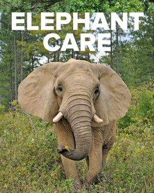 General Medical Fund for the Elephants -- Ongoing Need -- $ Up to You!