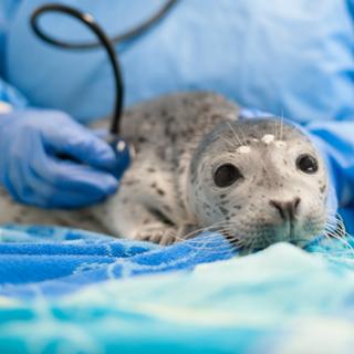 Help an Injured Marine Mammal Return to the Wild