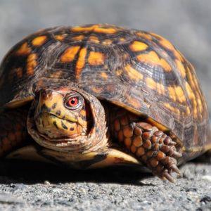 Top Ten: Reptiles - June 24