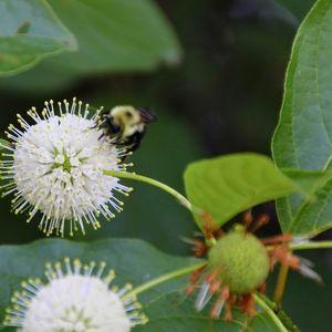 Top Ten: Wetland Plants- July 22