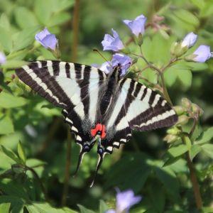 Top Ten: Butterflies - August 26
