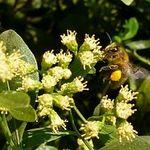 Family Bee Workshop - October 14
