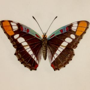 Botanical Art: Butterflies Workshop - March 6