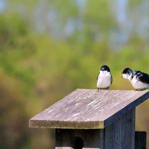 3. Household Membership: New or Renew