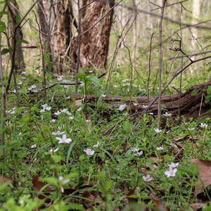 Spring Ephemerals & Pollinators Soup 'n Walk - April 18