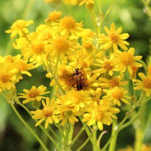 Top Ten: Wildflowers - April 22