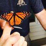 Monarch Tagging - October 12